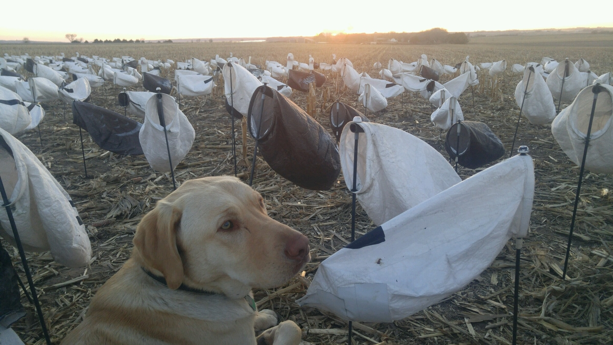Spring Snow Goose Packages