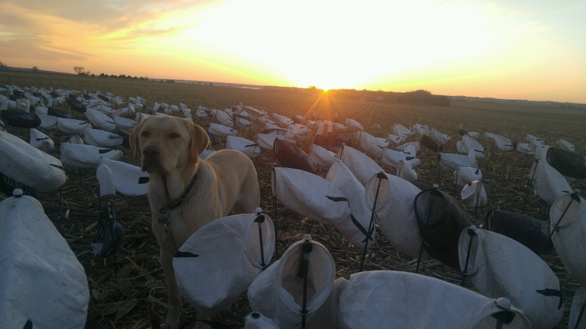Weekday Snow Goose Hunts